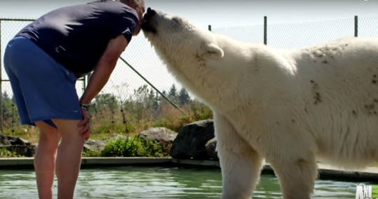 do polar bears eat humans