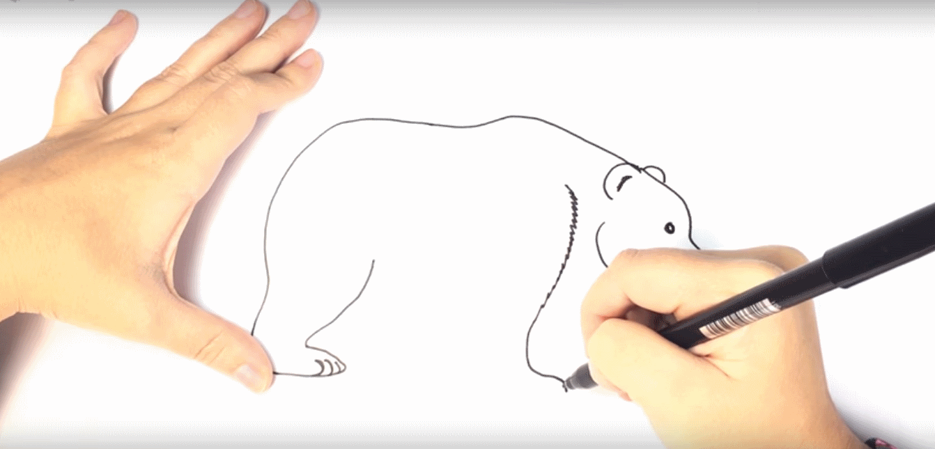 how to draw a polar bear for kids super simple steps