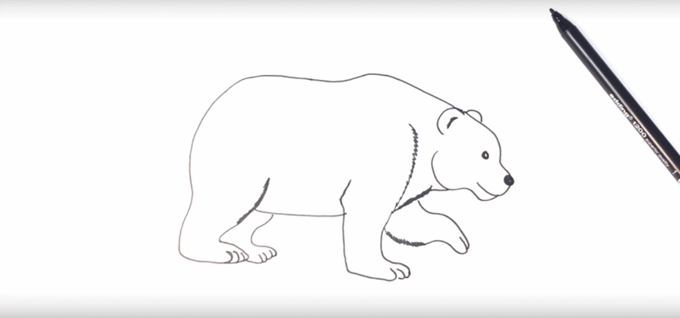 how to draw polar bear image of bear and rose imagetoolco